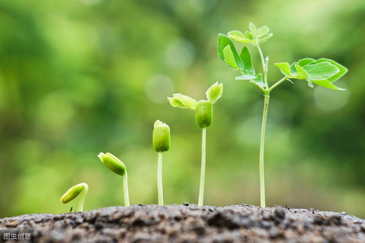 成长干货、生活感悟、故事类征稿令【新号易过稿】