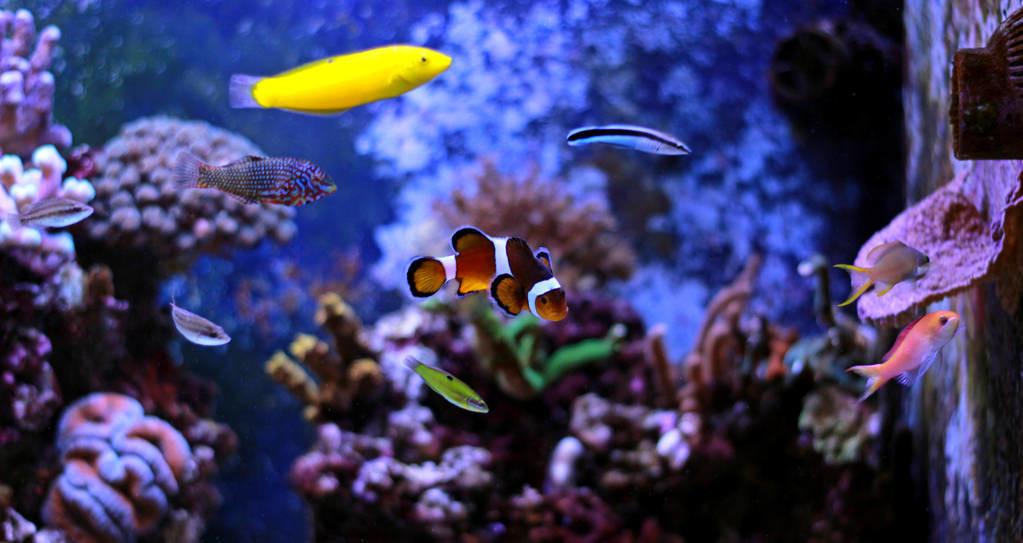 养观赏鱼的经验分享征稿令