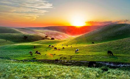 新疆旅游攻略征稿令